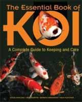 Koi for sale for Nishikigoi for sale