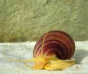 Invertebrates for Freshwater Aquariums - Wetwebmedia, Aquarium